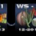 WS2 Rehlein2 klein