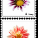 Briefmarke7a