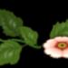 blume gepfadet